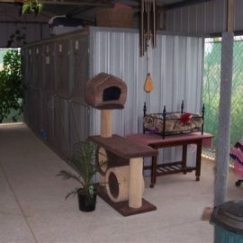 Inside our cattery